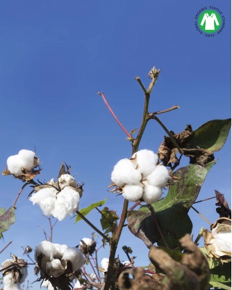 Cotton Organic Tank Top